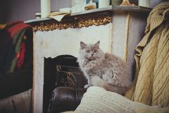 Kittens are fireplace vintage Stock Photography