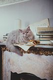 Kittens are fireplace vintage Royalty Free Stock Photo
