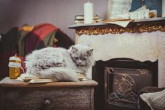 Kittens are fireplace vintage Stock Photo