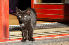Kittens first steps Royalty Free Stock Photo