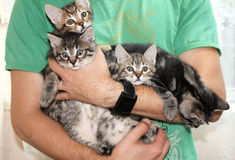 Kittens. Four small cute embraced kittens Stock Images