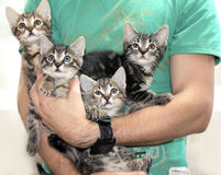 Kittens 2. Four small cute embraced kittens Royalty Free Stock Photos