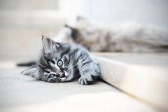 Kittens are funny Royalty Free Stock Image