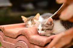 Kittens in a garden Royalty Free Stock Photos