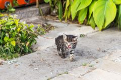 Kittens in the garden Royalty Free Stock Images