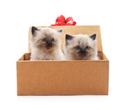 Kittens in gift box. Royalty Free Stock Image