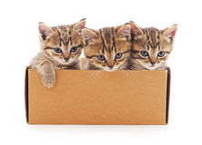 Kittens in gift box. Stock Photography