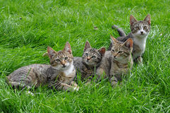 Kittens on the grass Stock Photos