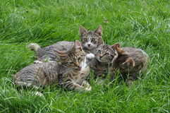Kittens on the grass Royalty Free Stock Images