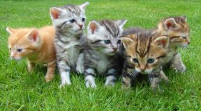 Kittens in grass Stock Images