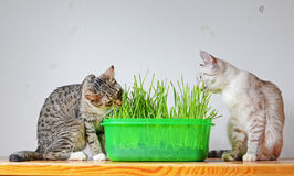 Kittens and grass royalty free stock photography