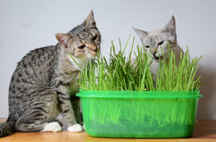 Kittens and grass Stock Images