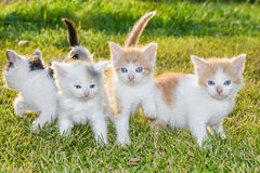 Kittens on the grass Royalty Free Stock Photo