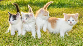 Kittens on the grass Royalty Free Stock Photos
