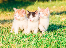 Kittens on the grass Stock Image