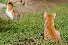 Kittens on the grass Stock Photography