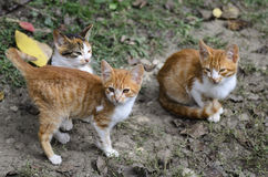 Kittens on the grass Stock Photo