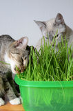 Kittens and grass stock image