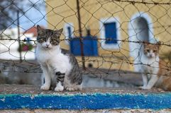 Kittens in a Greek island. View of cute kittens in a Greek island royalty free stock photos