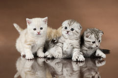 Kittens Stock Images