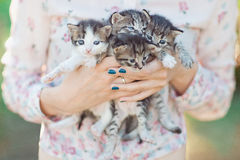 Kittens in the hands of. The girls in the spring stock photo