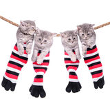 Kittens hanging washing line Royalty Free Stock Photos