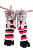 Kittens hanging washing line Royalty Free Stock Photography