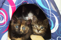 Kittens hiding in their den Royalty Free Stock Image