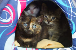 Kittens hiding in their den Stock Photos