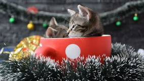 Kittens in the holiday decoration stock video