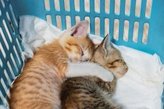Kittens hugging with sleeping in basket stock images