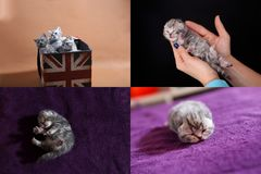 Kittens in human hand, multicam royalty free stock images