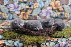 Free Kittens In A Nest Stock Image - 92133401