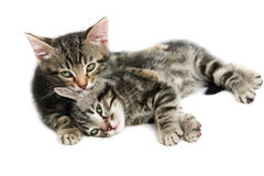 Kittens - isolated on white Royalty Free Stock Photography