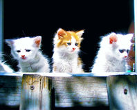 Kittens Stock Photography