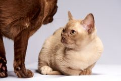 Kittens look at each other royalty free stock photography