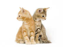 Kittens looking around Royalty Free Stock Photos