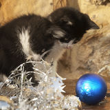 Kittens looking Christmas ball Stock Photos