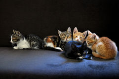 Kittens Looking Up Stock Image
