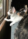 Mama Cat and Kitten Stock Photo
