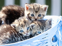 Kittens Lying in a Basket Outdoors Stock Image