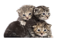 Kittens lying on each other royalty free stock photos