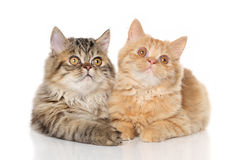 Kittens lying on a white background Stock Images