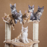 Kittens Royalty Free Stock Images