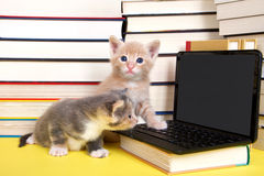 Kittens at miniature computer Royalty Free Stock Image