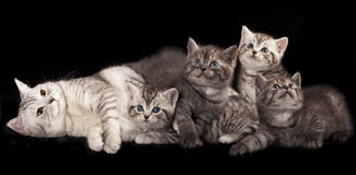 kittens and mother cat Stock Images