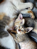 Kittens with mother Stock Photo
