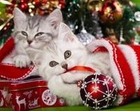 Kittens New Year stock photos