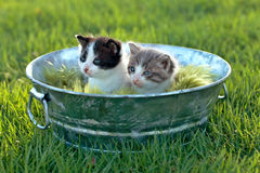 Kittens Outdoors in Natural Light Royalty Free Stock Images