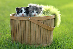 Kittens Outdoors in Natural Light Stock Photo